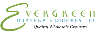 Evergreen Nursery Company Inc