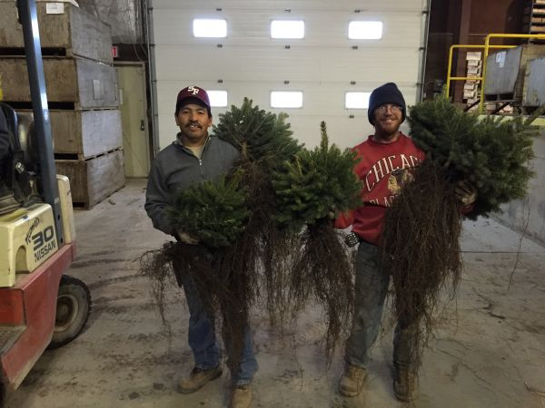 Evergreen Nursery Company Inc Evergreens